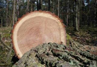 Wenn Bäume sprechen