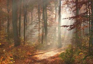 Wälder im Wandel